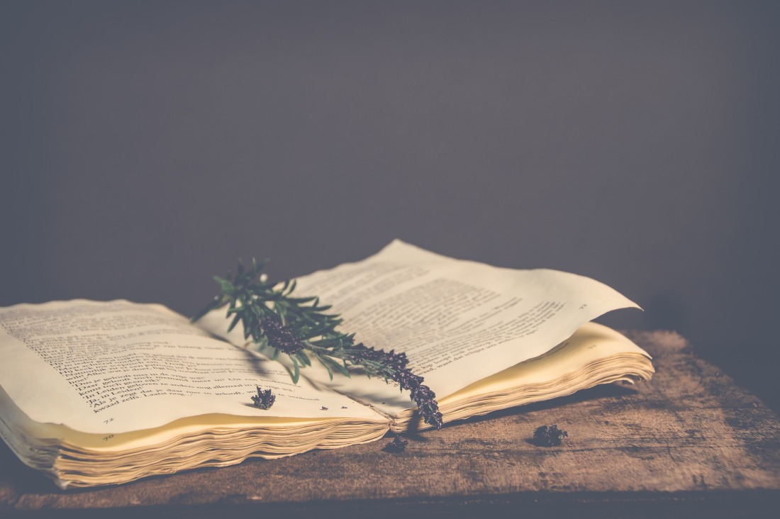 An open book with a sprig of a plant lying on the open pages.